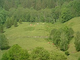The Mountain Pasture – The Ponyhofalm (Hinterjudendorfalm)